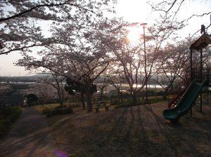 お花見画像 03